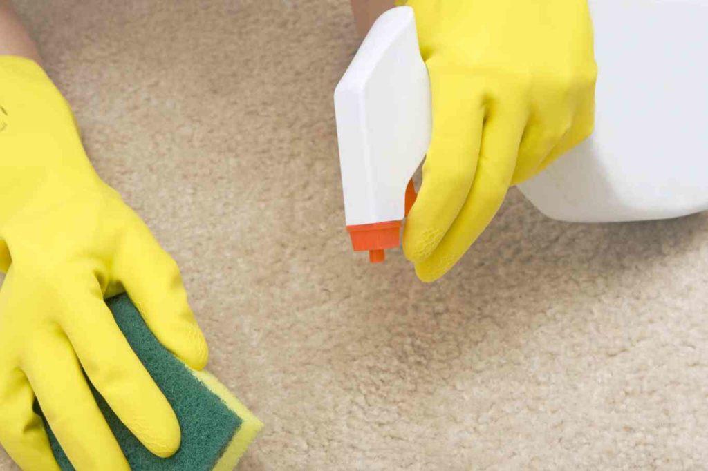Como-quitar-manchas-de-heces-en-la-alfombra-2_0-1